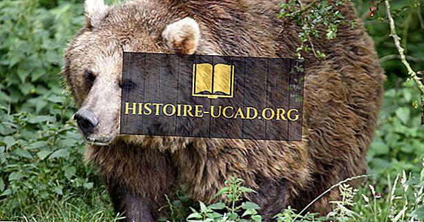 среда - Евразийские факты о медведях: животные Европы