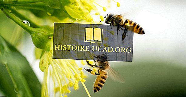 Které plodiny a rostliny jsou opylovány medovými včely?