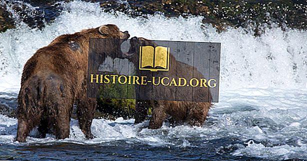 среда - Факты о буром медведе: животные Северной Америки