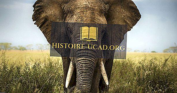 الاختلافات بين الفيل الآسيوي والفيل الأفريقي
