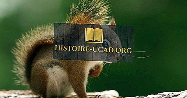 5 soorten Noord-Amerikaanse eekhoorns