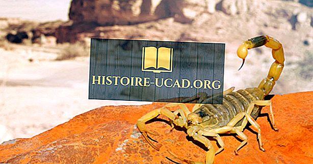 Najbardziej śmiertelne skorpiony żyjące dzisiaj