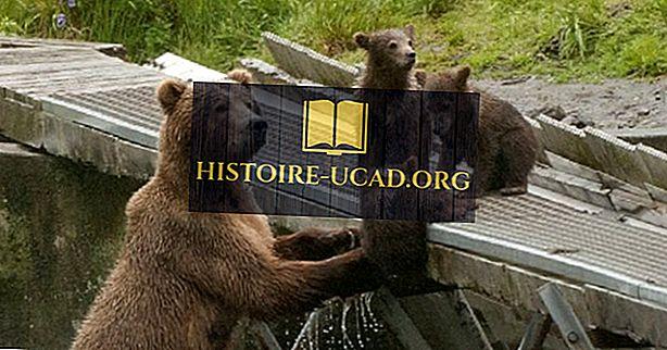 ข้อเท็จจริงของหมีกริซลี่: สัตว์ในอเมริกาเหนือ