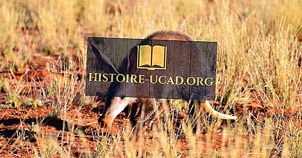 Aardvark Gerçekler - Afrika Hayvanlar
