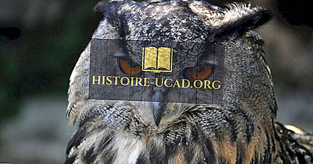 Avrasya Kartal Baykuşu Gerçekleri: Avrupa Hayvanları