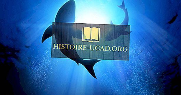 أكثر أنواع سمك القرش المهددة بالانقراض اليوم