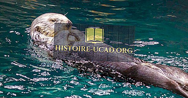 környezet - Tengeri vidéki tények: az óceánok állatai