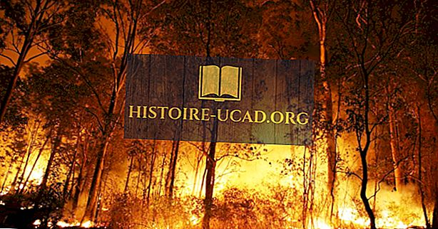 ما الذي يسبب حرائق الغابات؟