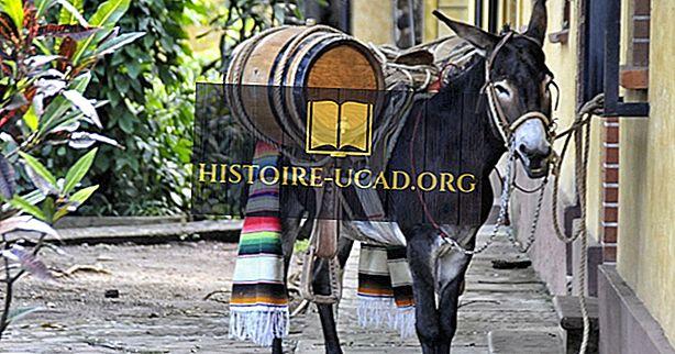 Burro Facts: Pohjois-Amerikan eläimet
