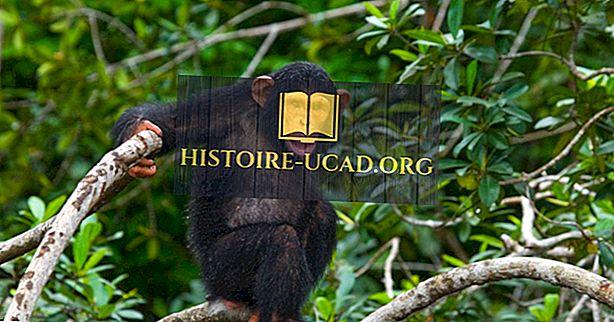 Štiri narodna parka Republike Kongo