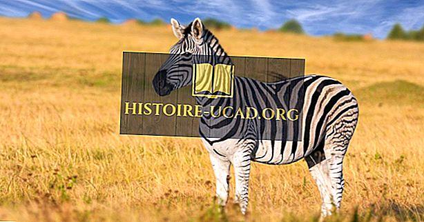 Quanti tipi di zebre ci sono?