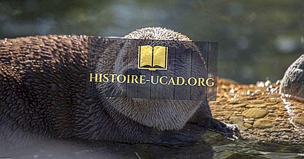 środowisko - River Otter Facts: Zwierzęta Ameryki Północnej
