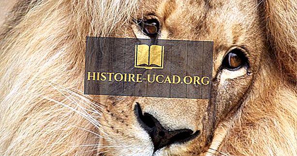 Faits sur les lions d'Afrique du sud-ouest: animaux d'Afrique