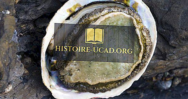 Ill účinky Abalone pytliactva v Južnej Afrike