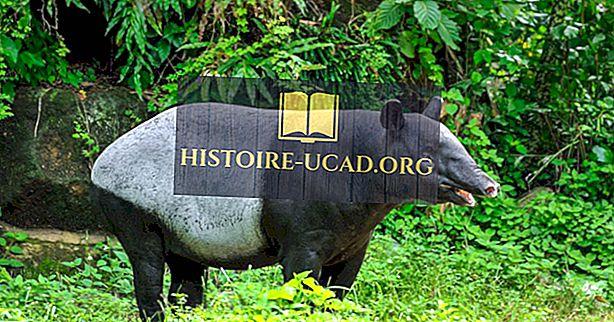 Les cinq espèces de tapirs vivant dans le monde aujourd'hui