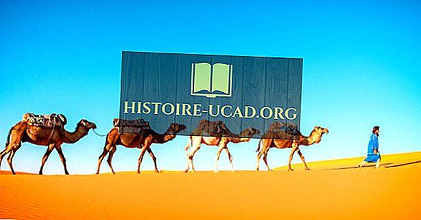 Bảy loài còn tồn tại của họ lạc đà