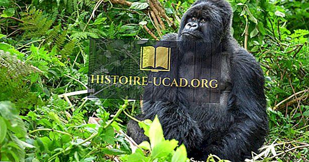 Dystrybucja i populacja goryli: ważne fakty i liczby