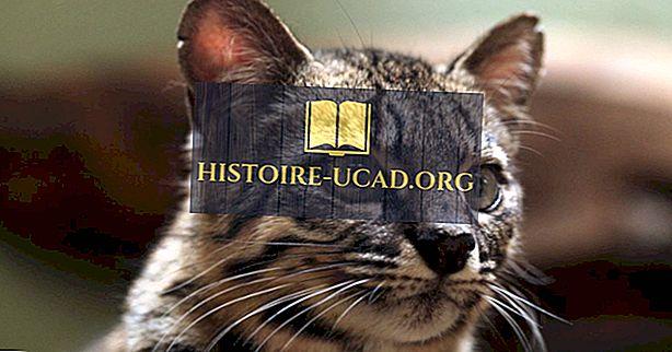 Obsah pro dospělé Bezpečné vyhledávání Jazyk, Ústa, Rty, Jahodový Jazyk Kočka, Zvíře, Pet, Kočička, Predátor.