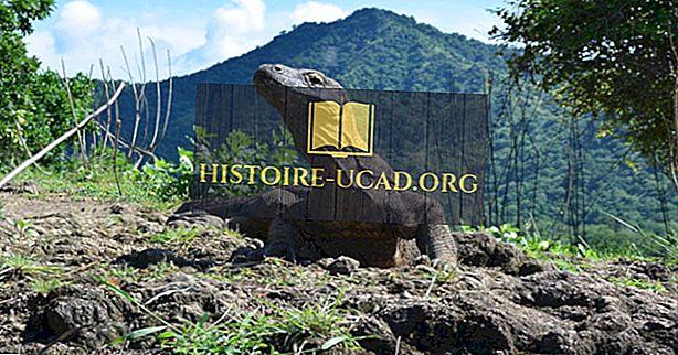 कोमोडो ड्रैगन फैक्ट्स - एनिमल्स ऑफ एशिया