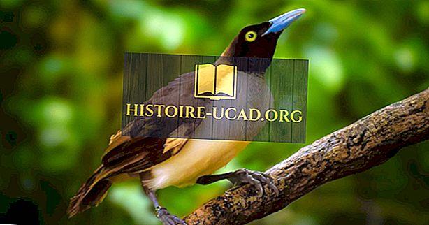 Co je Bird of Paradise?