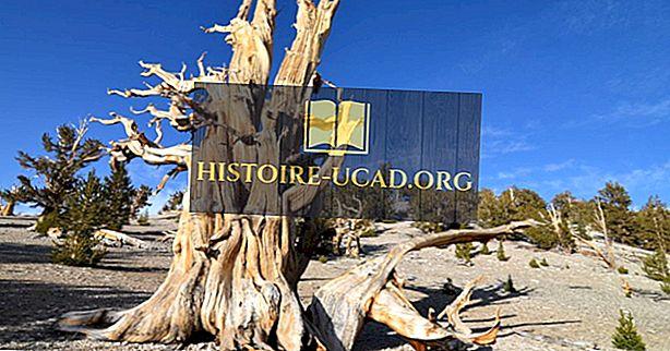 Kde je nejstarší strom na světě?