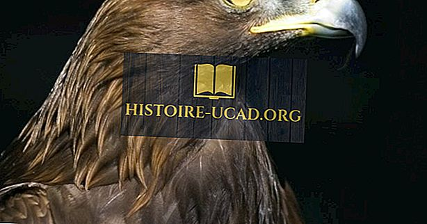 környezet - Golden Eagle Tények: Észak-Amerika állatai