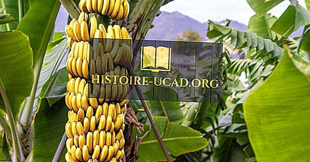 Čo je to 'Originálny' Banán?