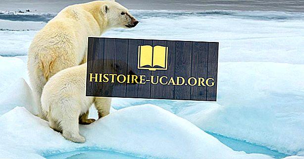 कहाँ ध्रुवीय भालू रहते हैं?