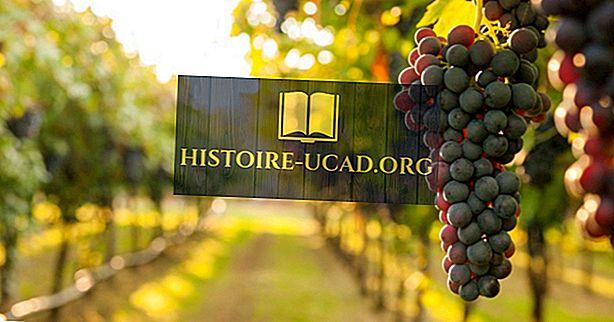 Qu'est-ce que la viticulture?