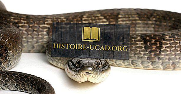 Datos de la serpiente de agua del lago Erie: Animales de América del Norte