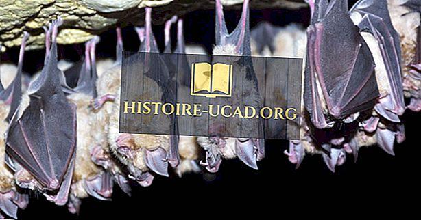 Vse, kar morate vedeti o netopirjih