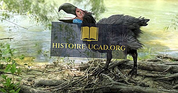 Epohe v svetovni zgodovini od izumrtja dinozavrov