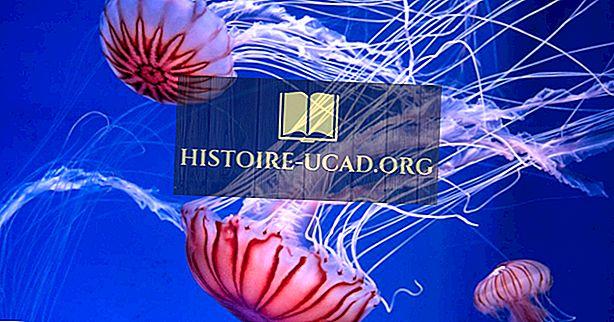 Quantas espécies de medusas existem?
