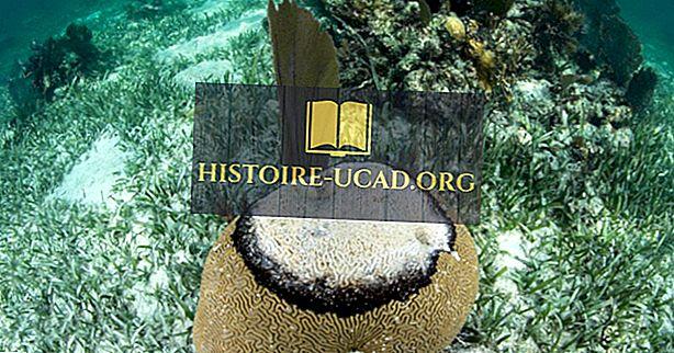 Vrste bolezni koral