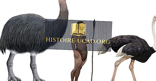 Fatos de Pássaro Elefante - Animais Extintos do Mundo