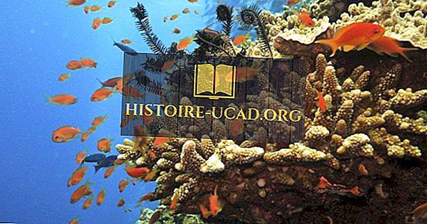 okolje - Kje je Veliki koralni greben?