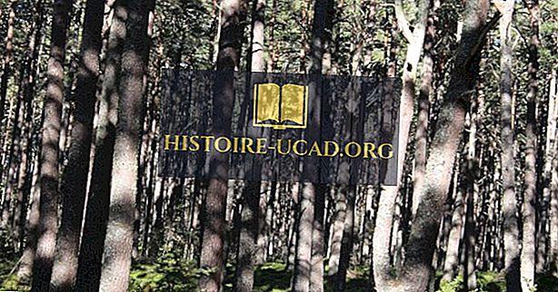 okolje - Kaj je bil kaledonski gozd?