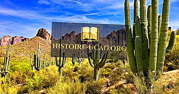 Cacto Saguaro - Fauna Única da América do Norte