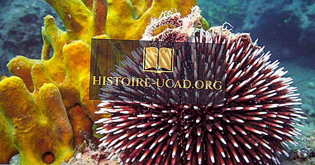 Sea Urchin Facts: Tiere der Ozeane