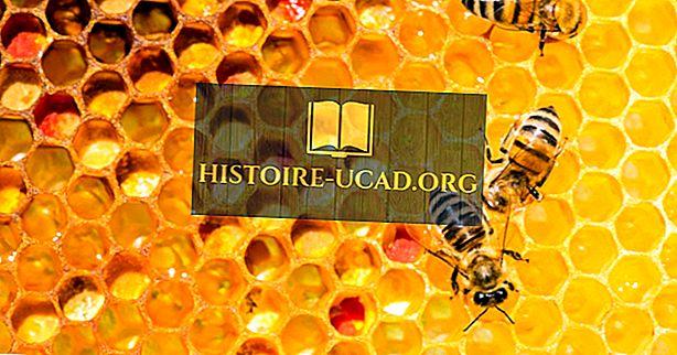 Pourquoi les abeilles font-elles du miel?
