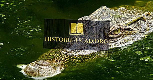 7 sugas krokodilieši uz ekstinkcijas sliekšņa