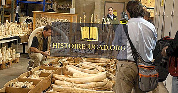Azijske države z največ zasegi slonovine
