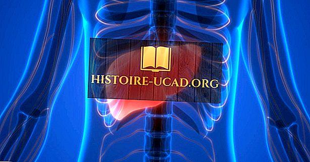 Факти за остра липса на черния дроб: болести по света