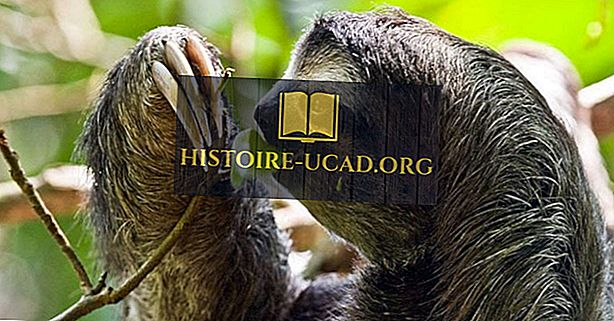 Useimmat Biodiverse-maat Keski-Amerikassa