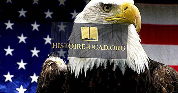 Τι έκανε το φαλακρό αετό Το εθνικό πουλί των Ηνωμένων Πολιτειών;