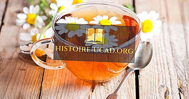 Svět je 7 nejchutnějších druhů čaje