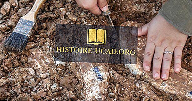 Một nhà cổ sinh vật học làm gì? - Histoire-Ucad.org