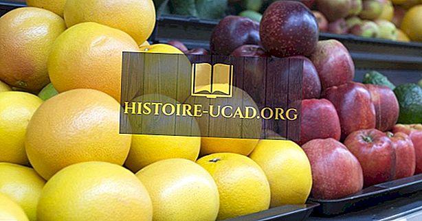 Care este semnificația Companiei United Fruit?