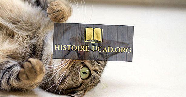 10 حقائق مذهلة عن القطط