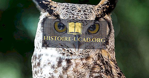 Great Horned Owl Facts: Zwierzęta Ameryki Północnej